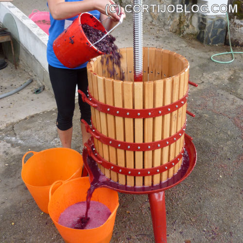 Pouring the grapes and must into the press