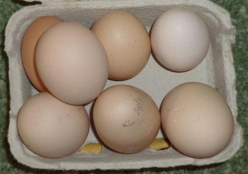 7-eggs1