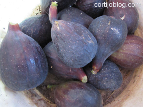 first figs of the season