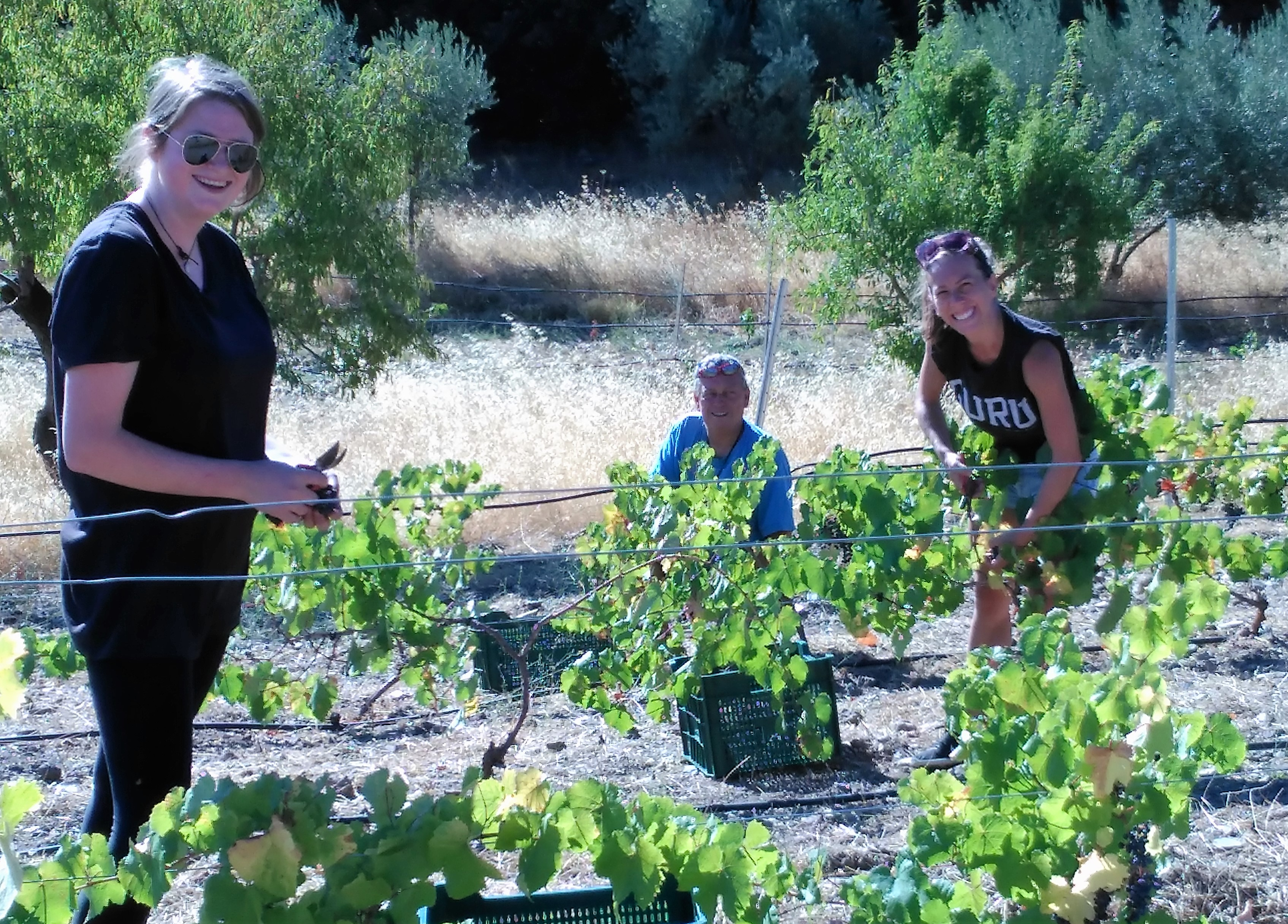 grape_picking
