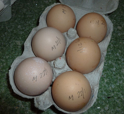 Information about eggs and chickens