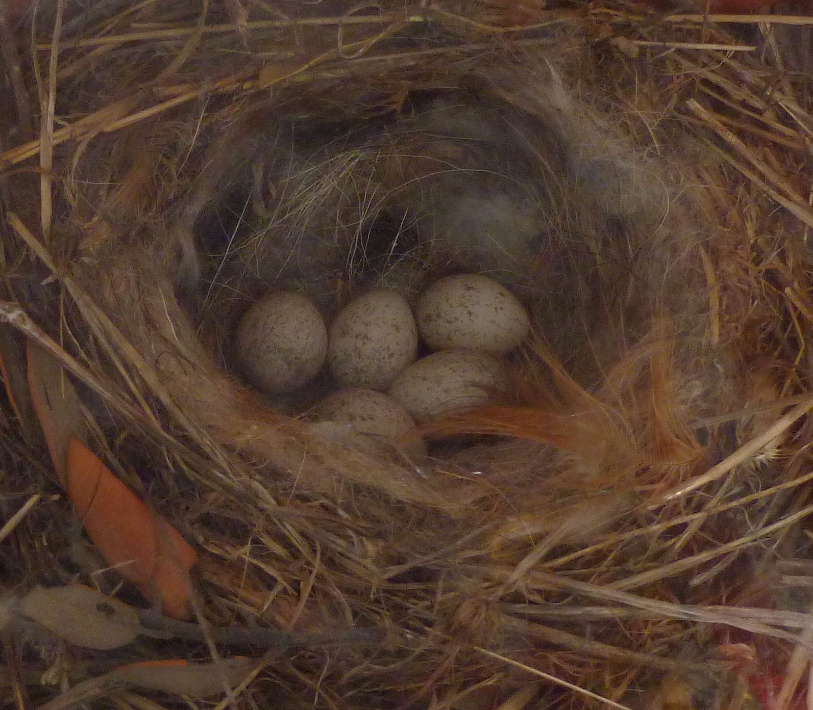 2014 wagtails nest
