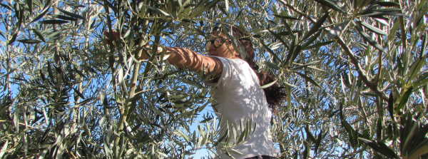 Nonnie Picking Olives