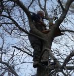 paul_tree.jpg