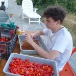 sam_tomatoes.jpg