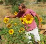 joe_sunflower.jpg